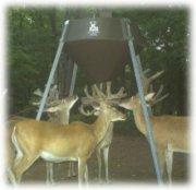 Boss Buck Gravity/Protein Deer Feeder