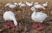 Cabela's Big Foot B2 Full Body Snow Goose Variety Pack