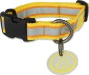 Olly Dog Nightlife II Dog Collar